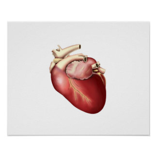 Illustration Of Human Heart Poster