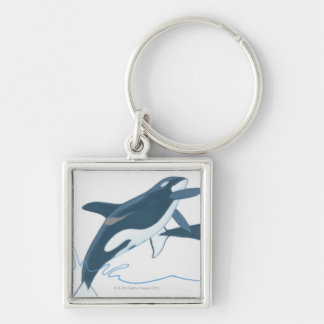 Illustration of Killer Whales (Orcinus orca) Keychain
