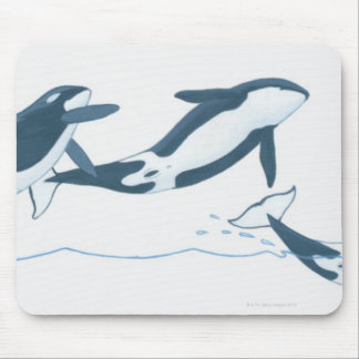 Illustration of Killer Whales (Orcinus orca) Mouse Pad