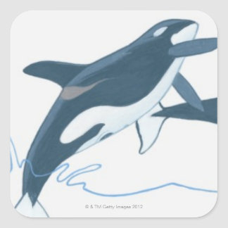 Illustration of Killer Whales (Orcinus orca) Square Sticker