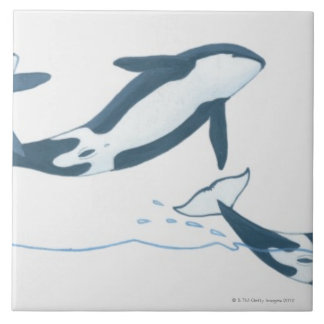 Illustration of Killer Whales (Orcinus orca) Tile