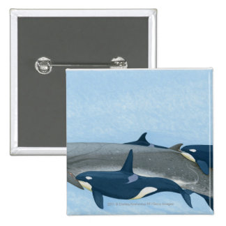 Illustration of Killer Whales working in a group 2 Inch Square Button