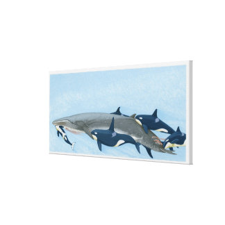 Illustration of Killer Whales working in a group Canvas Print