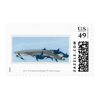 Illustration of Killer Whales working in a group Postage