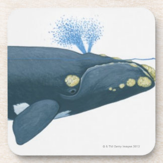 Illustration of North Pacific Right Whale Beverage Coaster