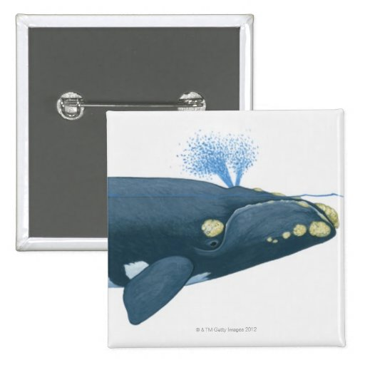 Illustration of North Pacific Right Whale Pinback Button