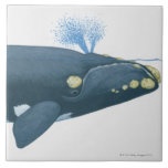 """Illustration of North Pacific Right Whale Ceramic Tile<br><div class=""""desc"""">Illustration of North Pacific Right Whale 