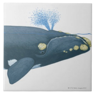 Illustration of North Pacific Right Whale Ceramic Tile