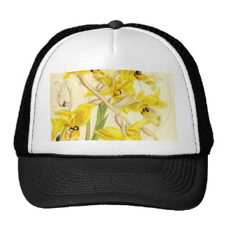 Illustration of Stanhopea wardii Trucker Hat