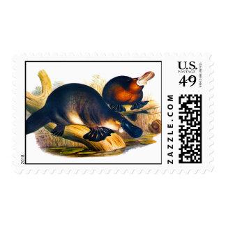 illustration of the australian mammal Platypus Postage