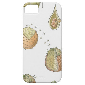 Illustration of the life cycle of a Selaginella iPhone SE/5/5s Case