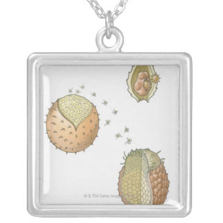 Illustration of the life cycle of a Selaginella Silver Plated Necklace