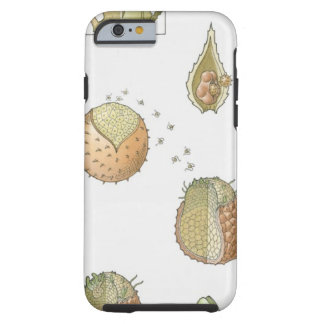 Illustration of the life cycle of a Selaginella Tough iPhone 6 Case