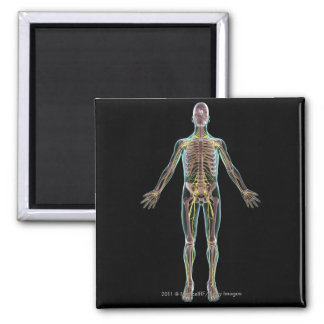 Illustration of the nervous system 2 inch square magnet