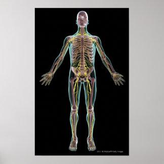 Illustration of the nervous system poster