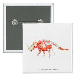 Illustration of Triceratops muscular system Pinback Button