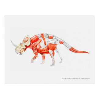 Illustration of Triceratops muscular system Post Cards