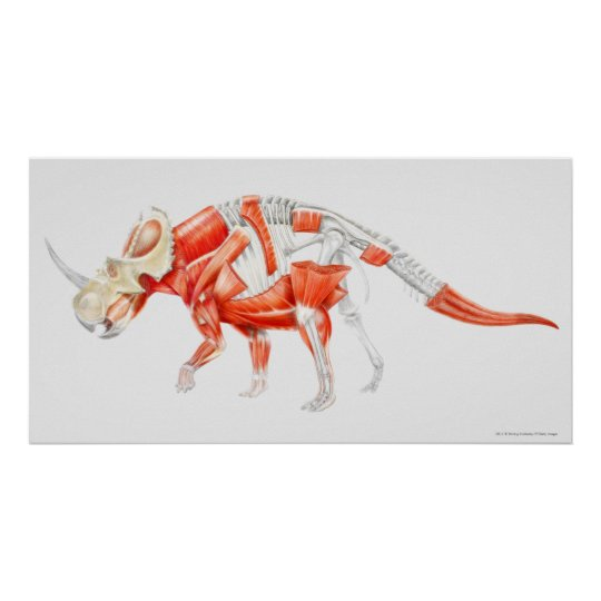 Illustration of Triceratops muscular system Poster