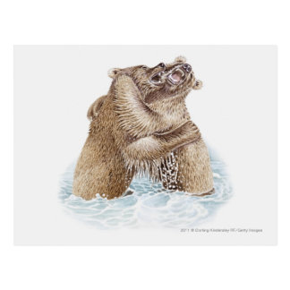 Illustration of two Brown Bears fighting in water Postcard