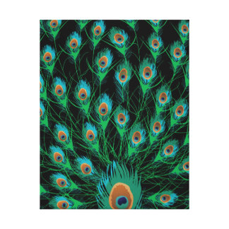 Illustration With Peacock Feathers on Black Canvas Print