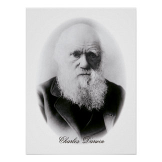Ilustración de Charles Darwin Póster