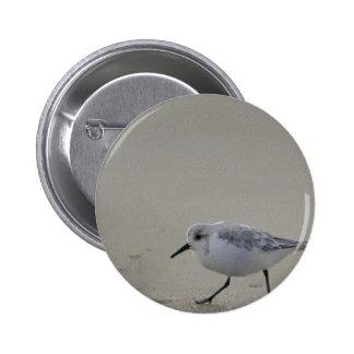 Ilustraciones de la ave costera pin