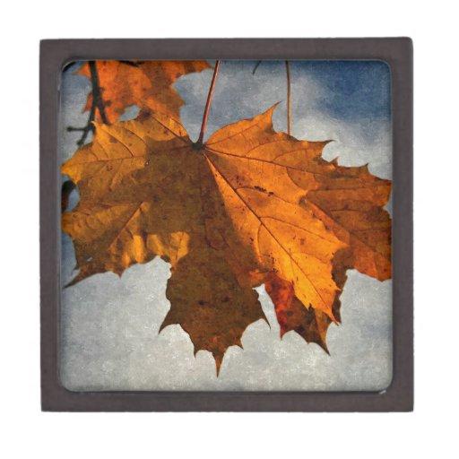 Ilustraciones de la hoja del otoño cajas de regalo de calidad