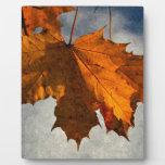 Ilustraciones de la hoja del otoño placas