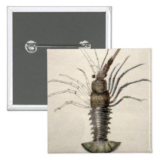 Ilustraciones de la langosta del vintage pin cuadrada 5 cm