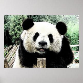 Ilustraciones de la panda póster