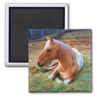 Ilustraciones de reclinación del caballo del Pinto Imán Cuadrado