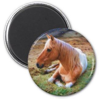 Ilustraciones de reclinación del caballo del Pinto Imán Redondo 5 Cm