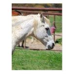 ilustraciones del lápiz del caballo blanco tarjeta postal