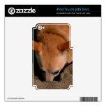 Ilustraciones del perro y de la arena iPod touch 4G calcomanías