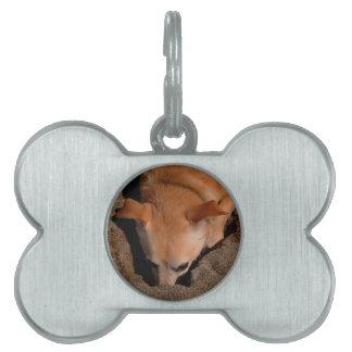 Ilustraciones del perro y de la arena placa de mascota