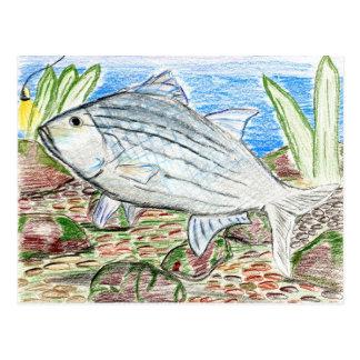 Ilustraciones que ganan por J la Florida grado 6 Postal