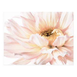 Ilustraciones rosadas de la dalia - personalizar postales
