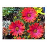 IM000582-3, New Hampshire      Red Daisy Postcard