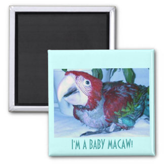 I'M A BABY MACAW! 2 INCH SQUARE MAGNET