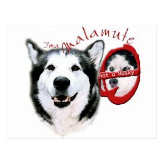 I'm a Malamute, I'm not a Husky Postcard