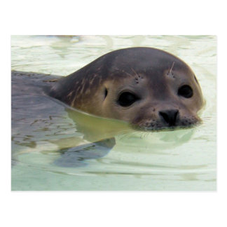 I'm a Seal Postcard