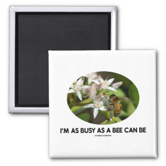 I'm As Busy As A Bee Can Be (Bee On White Flower) 2 Inch Square Magnet