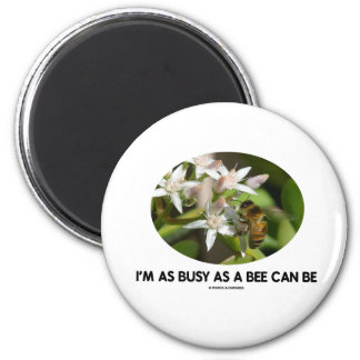 I'm As Busy As A Bee Can Be (Bee On White Flower) 2 Inch Round Magnet