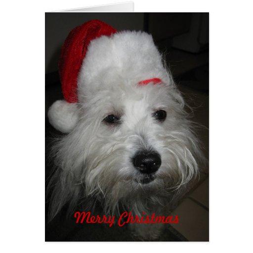 I'm Behaving Myself Coton Christmas Card