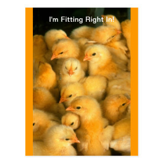 I'm Fitting Right In! New Home Move Job Baby Chick Postcard