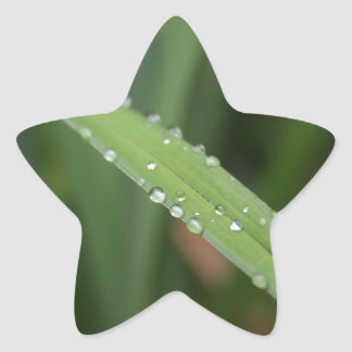 I'm just a blade of grass in the dew star sticker