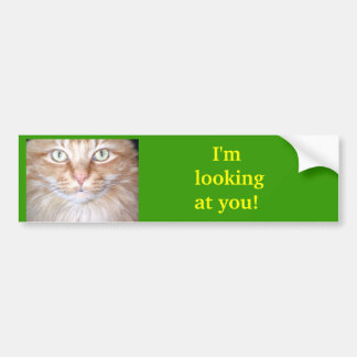 I'm Looking at You! Bumper Stickers