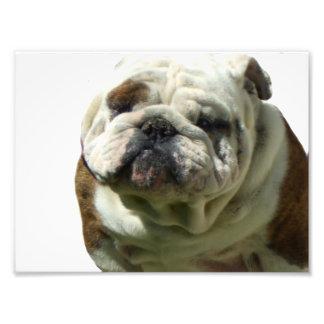 I'm not fat bulldog photo print