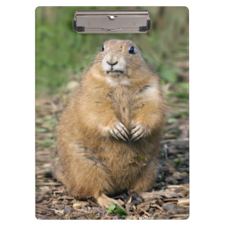 I'm not Fat, I'm Cuddly Clipboard