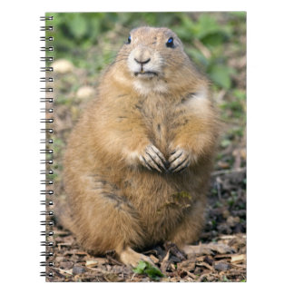 I'm not Fat, I'm Cuddly Notebook